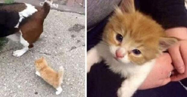 Бездомный котенок едва успевал бежать за собакой и человеком, пока не пришел домой
