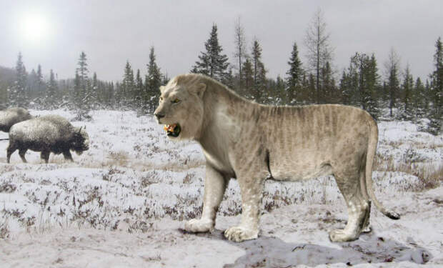 Львы из Якутии: вечная мерзлота раскрывает старые тайны мира