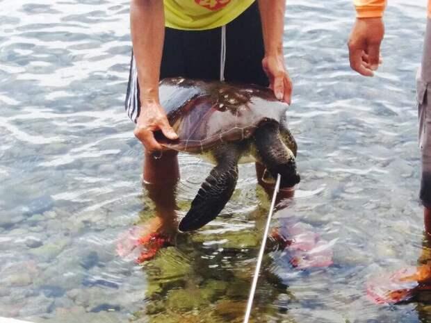 Жителю Владивостока грозит 20 лет тюрьмы за убийство черепахи!