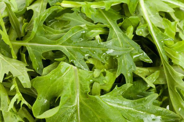 Мизуна – японская капуста для ленивых