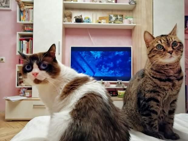 Сородичи обижали приютского кота и не подпускали его к еде. Бедняга сильно исхудал и потерял надежду