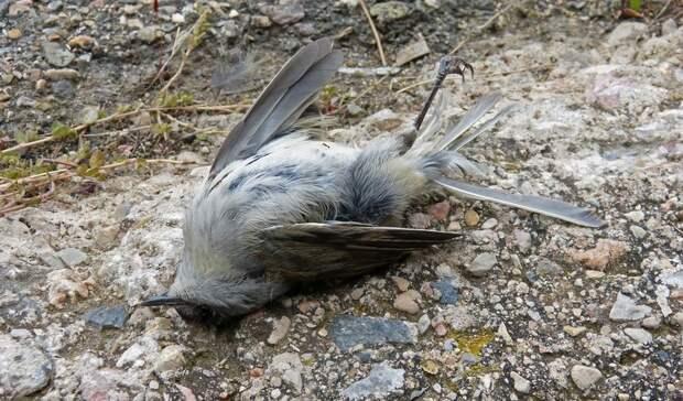 Ветеринар назвал вероятную причину гибели птиц вРостовской области