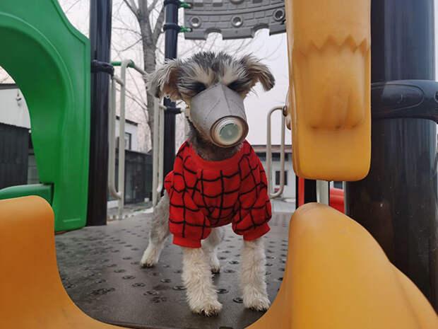 Спасаясь от коронавируса, китайцы начали надевать маски даже на своих собак