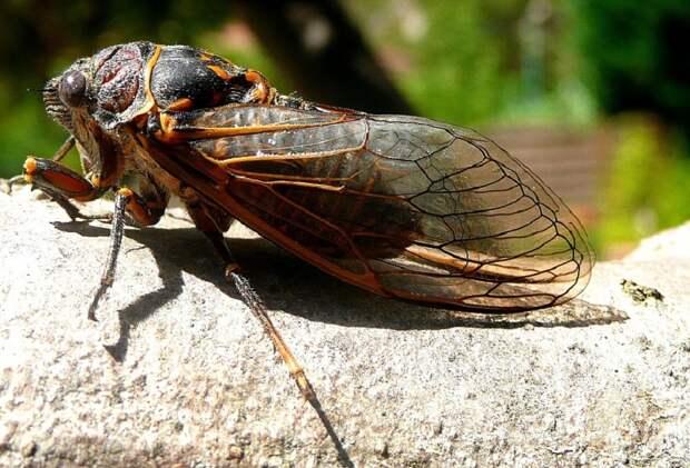 Лайнер с сопровождающими Байдена репортерами не вылетел из США из-за цикад