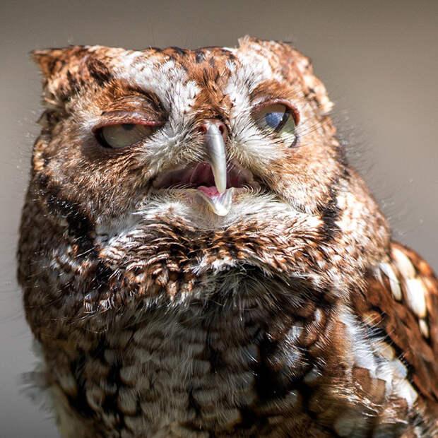 фото невыспавшейся совы господь, посылая нам