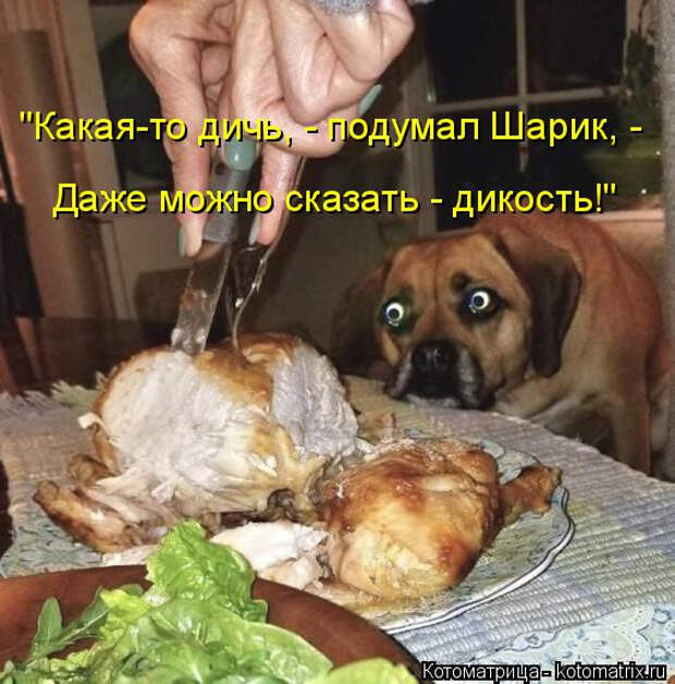 kotomatritsa_o (562x570, 246Kb)