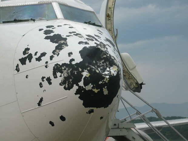 Почему птицы врезаются в самолеты