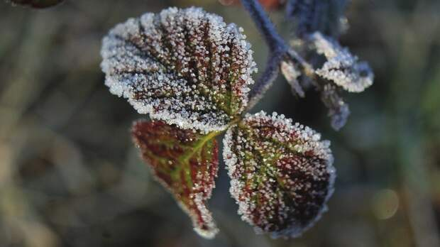Уже завтра в Крым придут заморозки