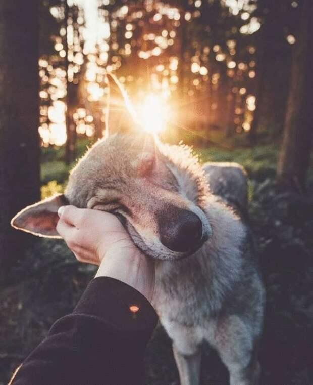 Влюбленные зверята