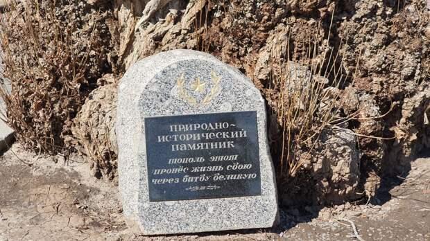 Узнал интересные подробности про знаменитый тополь на Площади Павших Борцов в Волгограде