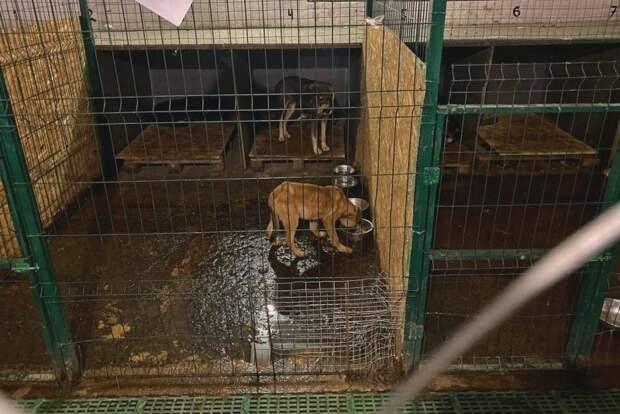 Правительство Севастополя узнало о созданной юристами тюрьме для собак