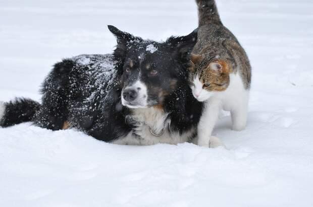 Власти Москвы помогут с поиском потерявшихся собак и кошек в интернете