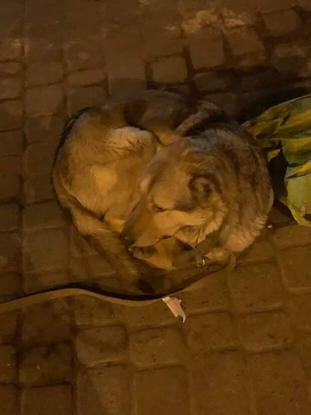 Хозяина забрала скорая, а верный пес, всю ночь охранял его вещи
