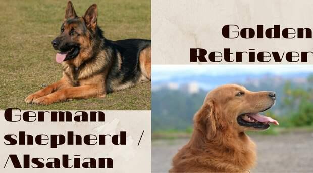 Как называются и произносятся породы собак на английском