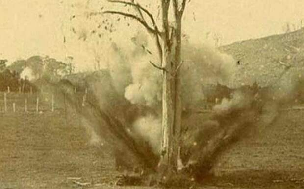 дерево с пулей