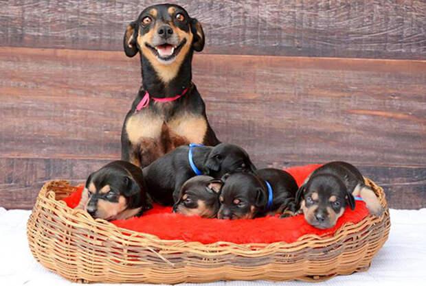 Гордые и счастливые: собачьи мамы со своими щенками
