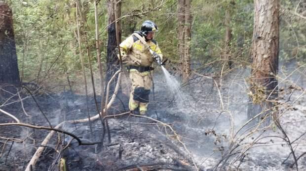 Пожар у деревни Поварёнки в Удмуртии продолжается на территории в 45 га