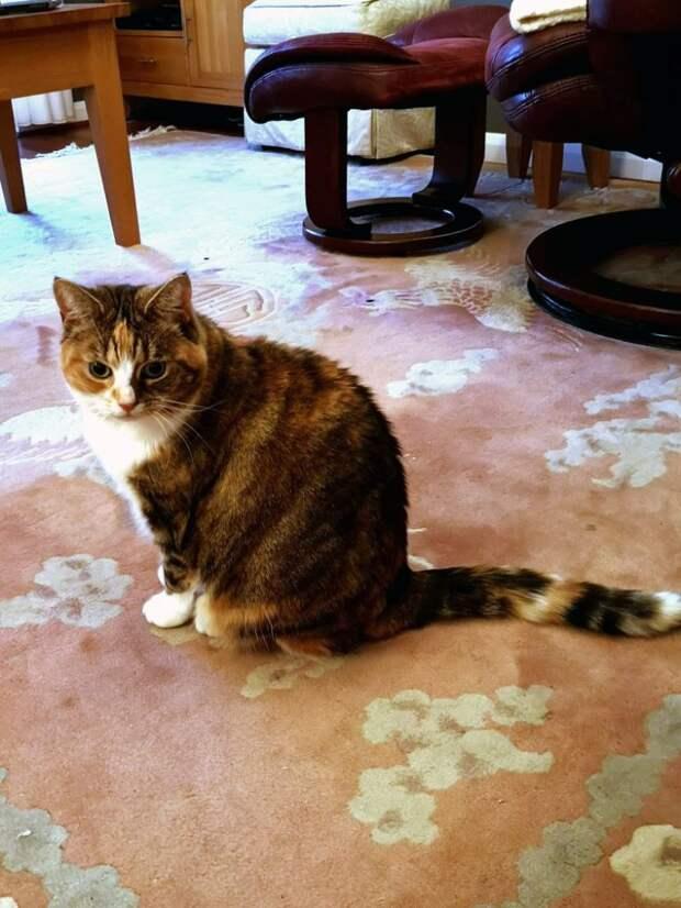 Толстая кошка из приюта вновь стала стройной благодаря заботе новых владельцев