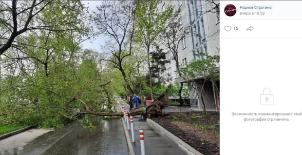 Упавшее дерево на улице Кулакова убрано — управа