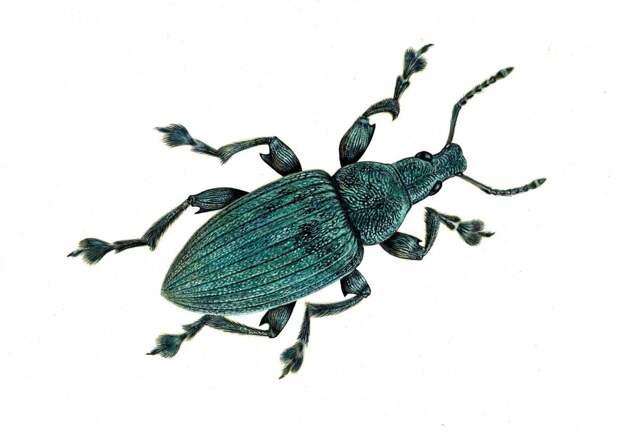 Биологи объяснили происхождение переливчатой структурной окраски насекомых