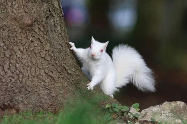 4. Белка альбиносы, животные, красота, окрас, цвет