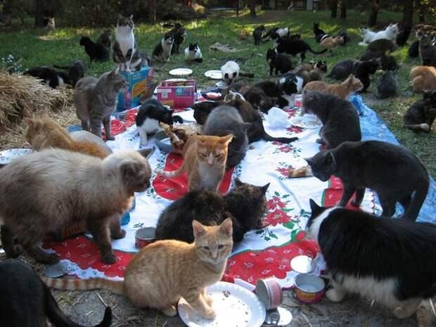 Советские кошки были сытыми и довольными! Чем кормили домашних любимцев в СССР?