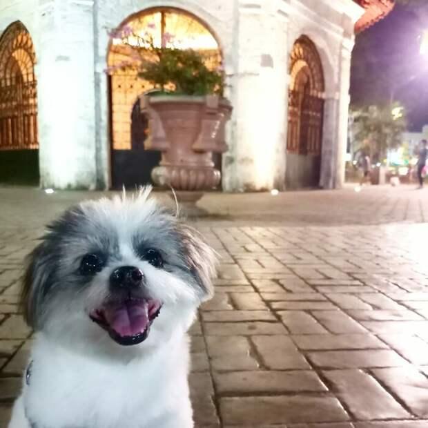 Самый позитивный челлендж в мире: хозяева показывают своих улыбающихся собак