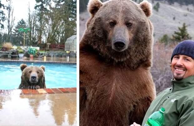 Видео: Мужчина спас медвежонка и отнес к себе домой, а тот вырос и отказался уходить