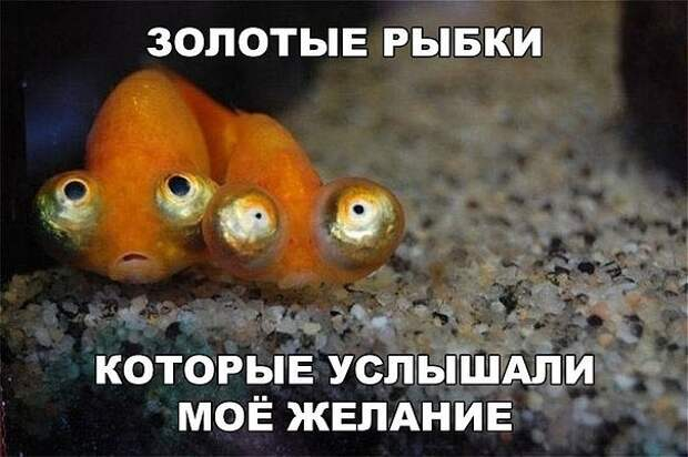 3416556_i_56_ (604x402, 64Kb)
