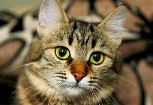 Как кошки спасают нас от бед