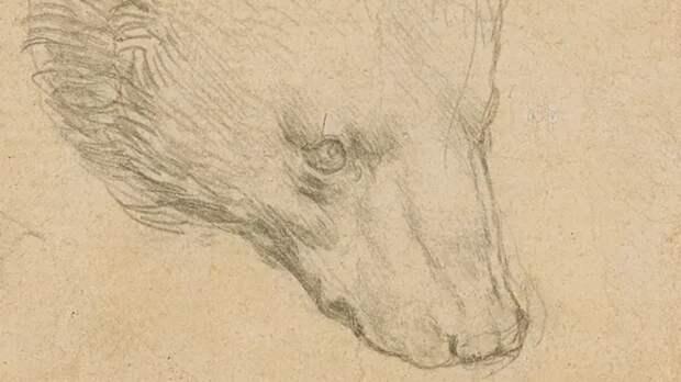 Рисунок медведя Леонардо да Винчи выставят на аукцион за $16,7 млн