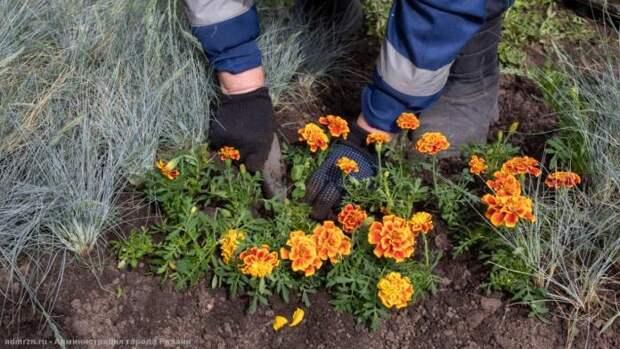 Ко Дню Победы в Рязани высадят 10 тысяч цветов