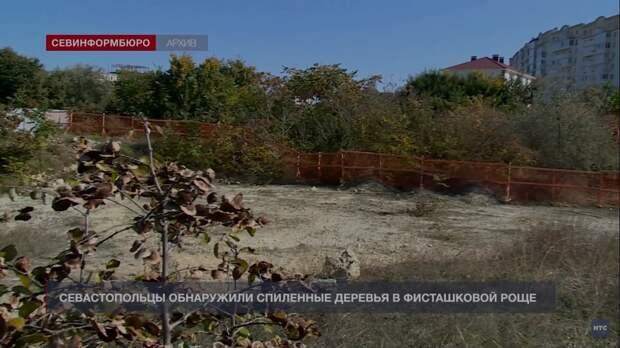 Севастопольцы бьют тревогу: уничтожается роща краснокнижных фисташек