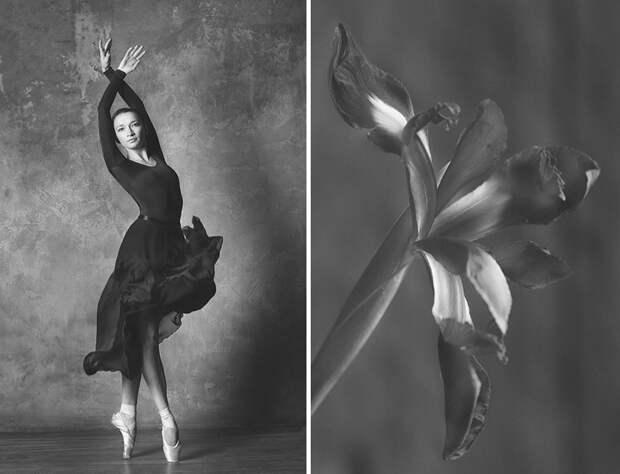 Фотограф создала серию фотографий, сравнивающих цветы и балерин