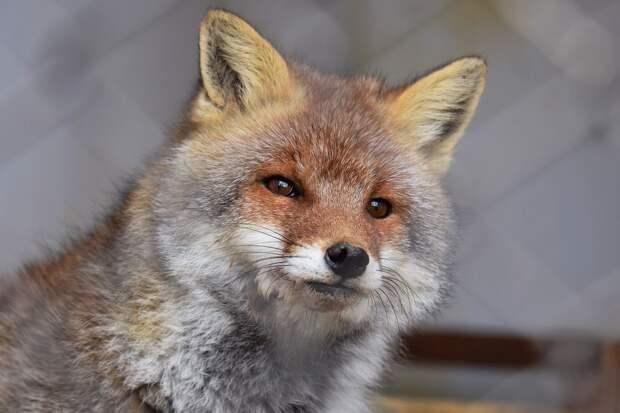 Больше 4 тыс человек в Удмуртии обратились за медпомощью их-за укусов животных