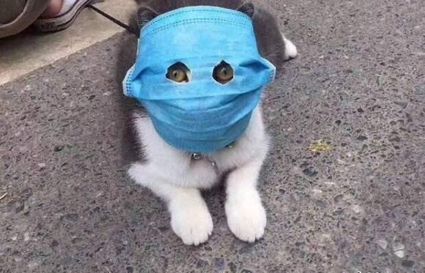 Сначала от коронавируса спасут людей, а потом и наших животных