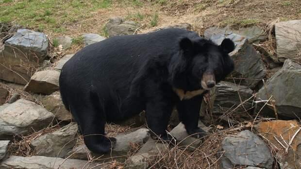 Приют для гималайских медведей открылся в Приморье
