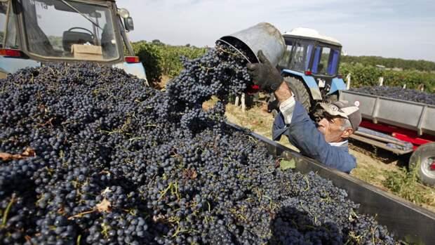 Почему вино из Крыма продается на Украине вопреки объявленным санкциям
