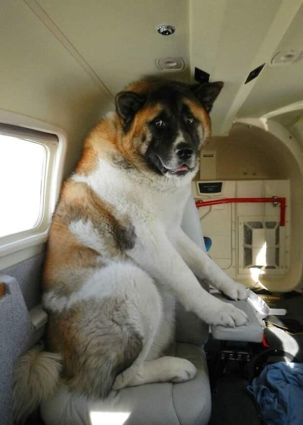 2. Немного напуган, ведь это его первый перелет борт, животные, пассажир, перелет, полет, самолет, фото