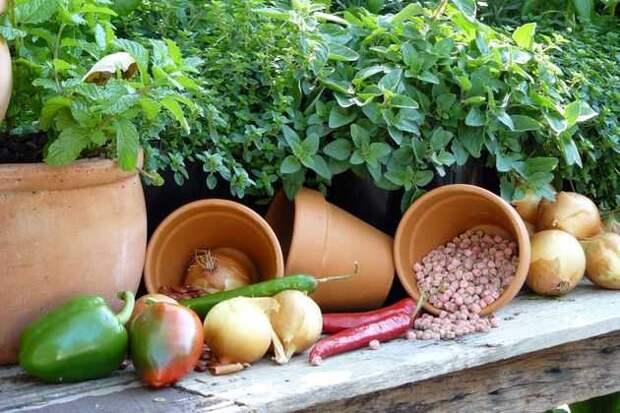 осенние дела: инструменты, удобрения, семена