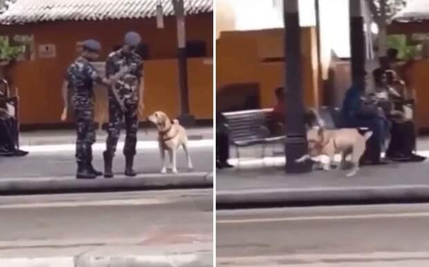 «Свобода!»: реакция пса на разрешение гулять без поводка развеселила Сеть