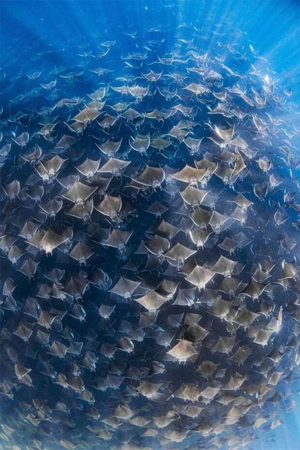12 крутых фото, доказывающих, что под водой жизнь интереснее, чем у нас