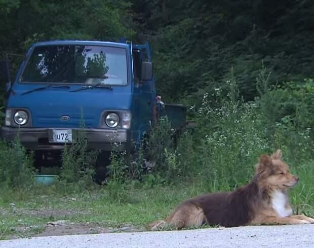 В любую погоду возле проезжей части бегала собака. Она кого-то ждала, глядя на дорогу глазами, полными надежды