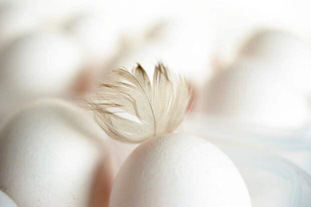 Данкверт рассказал об особенностях зависимости России от импортных яиц