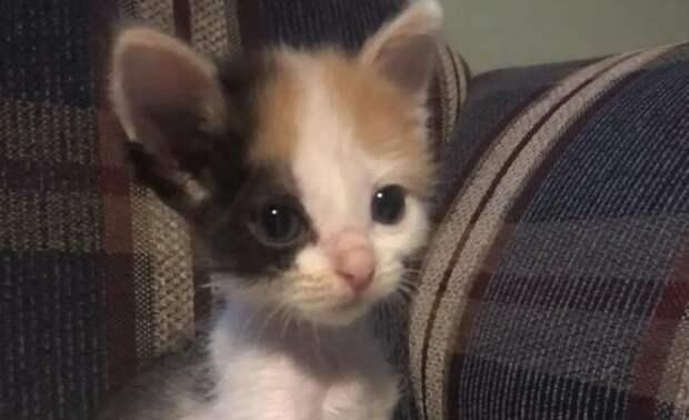 Всего год назад этот котенок был готов погибнуть от голода