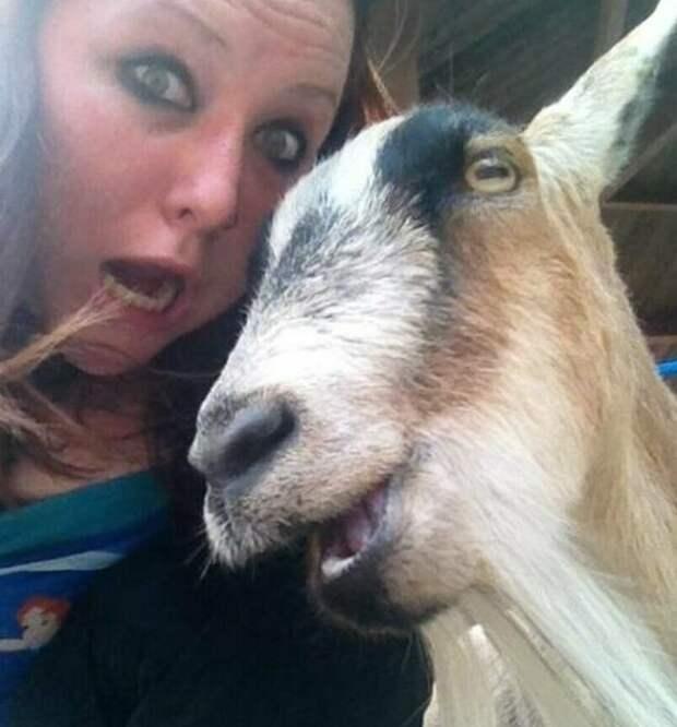 20 позитивных селфи с животными - осторожно, милота зашкаливает! Весёлые, животные, милые, селфи, фото