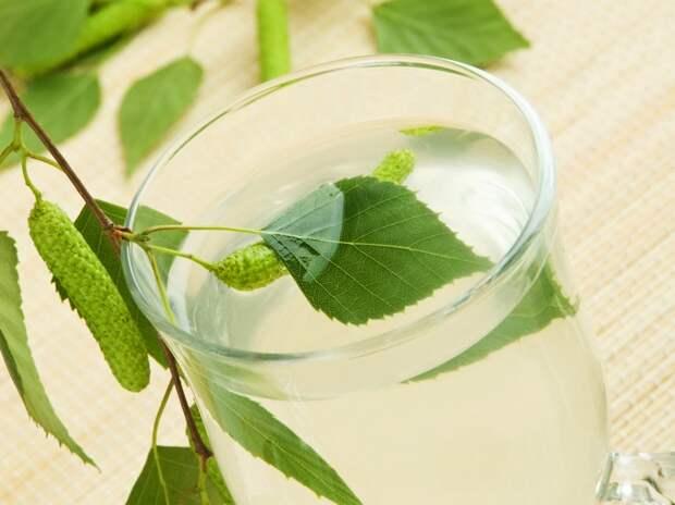 березовые листья беременность
