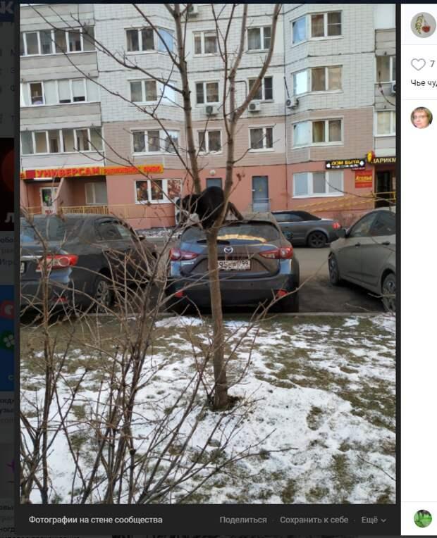 Фото дня: кот «застрял» на дереве в Некрасовке