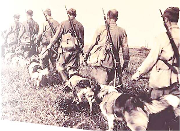 «Почему их рвали собаки? Бойня у «Зелёной Брамы».