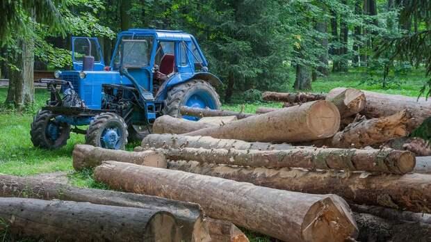 В Ленобласти будут судить руководителей фирмы, незаконно вырубившей деревья на 11 млн